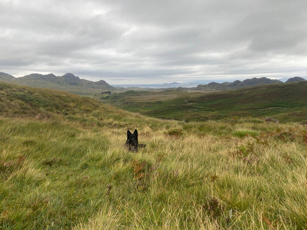 Camping with the Dog in the Scottish Highlands